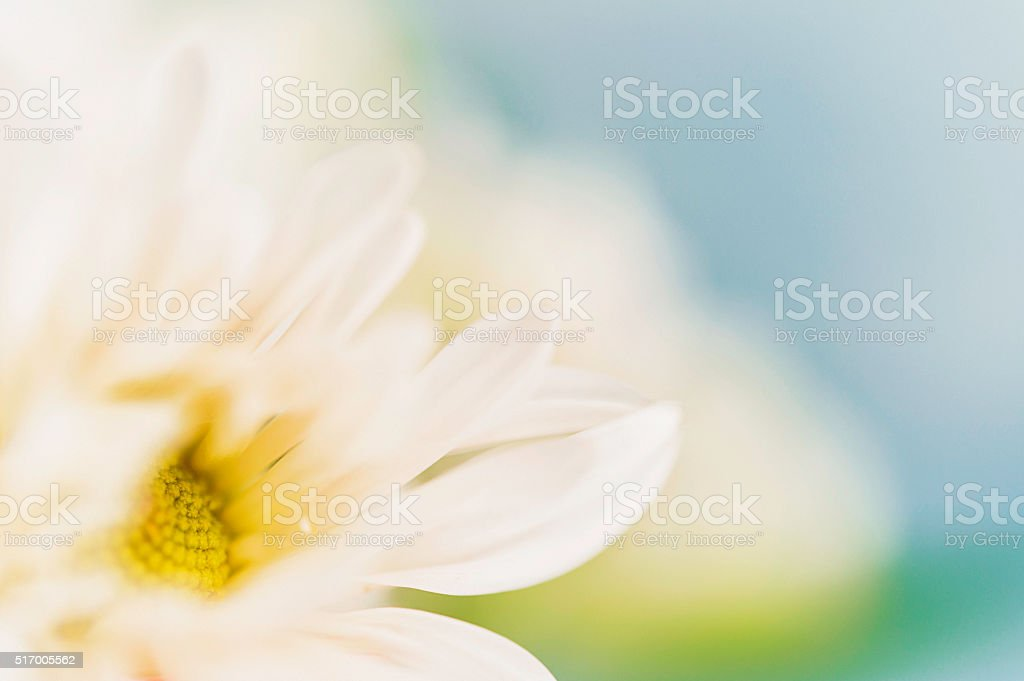 Abstract flower background of extreme macro dahlia stock photo