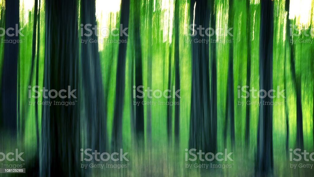 abstract forest royalty-free stock photo