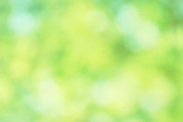 Abstract Fresh green background stock photo
