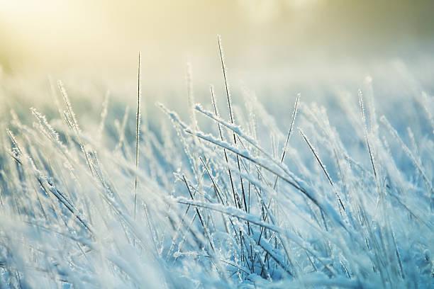 Abstract frozen grass picture id182374191?b=1&k=6&m=182374191&s=612x612&w=0&h=epfw4rc9d1fxfv0y3jkkqwrs8kq7ptfs0eniev1zxws=