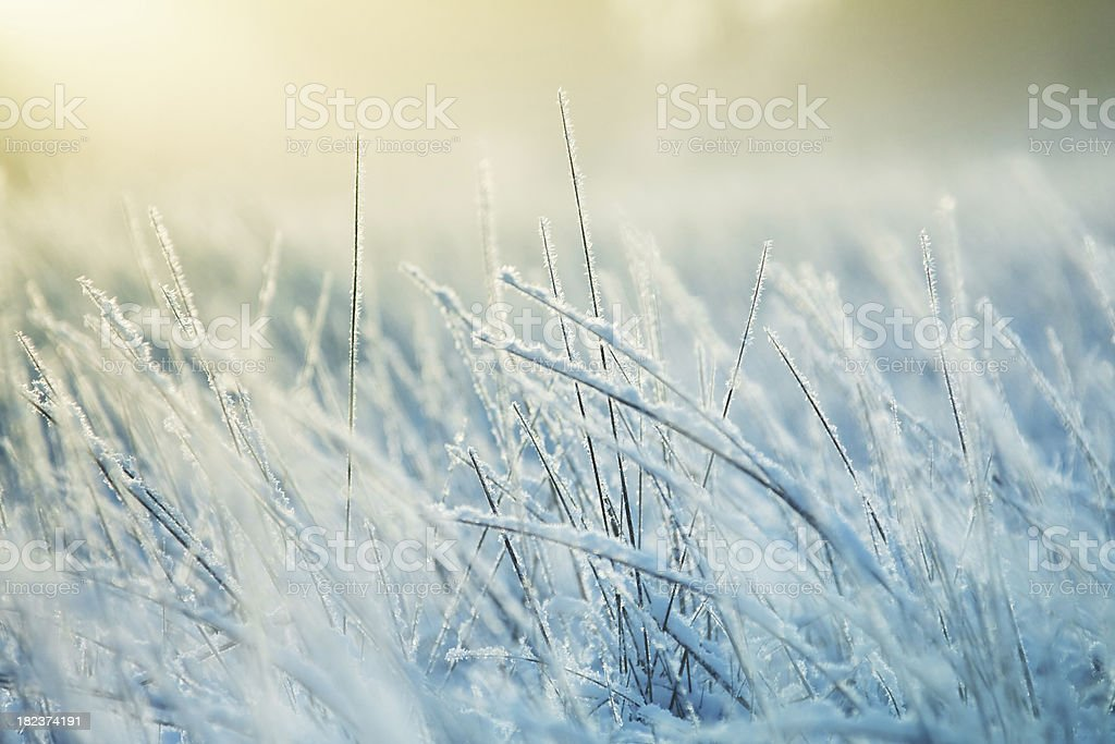 Abstract frozen grass stock photo