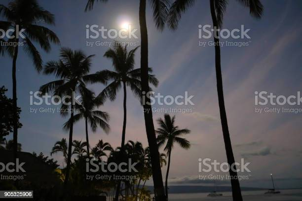 Photo of Abstract full moon over ocean with palm trees in silhouette