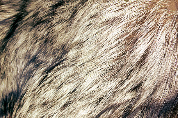 abstract fur background close up shot of abstract fur background animal hair stock pictures, royalty-free photos & images