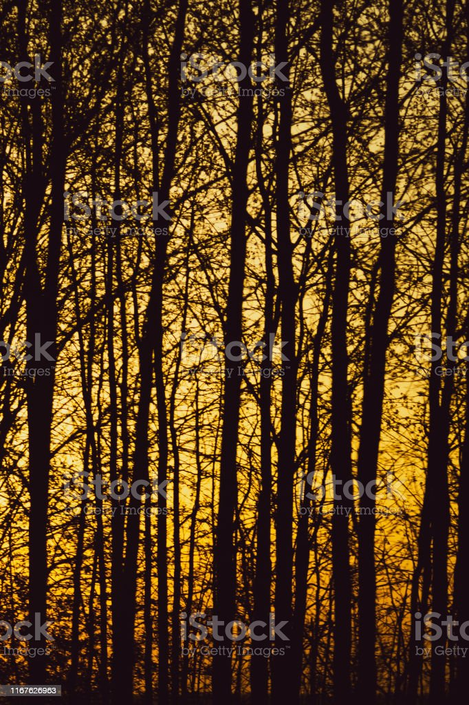 Abstract golden forest texture background. forest tree branches...