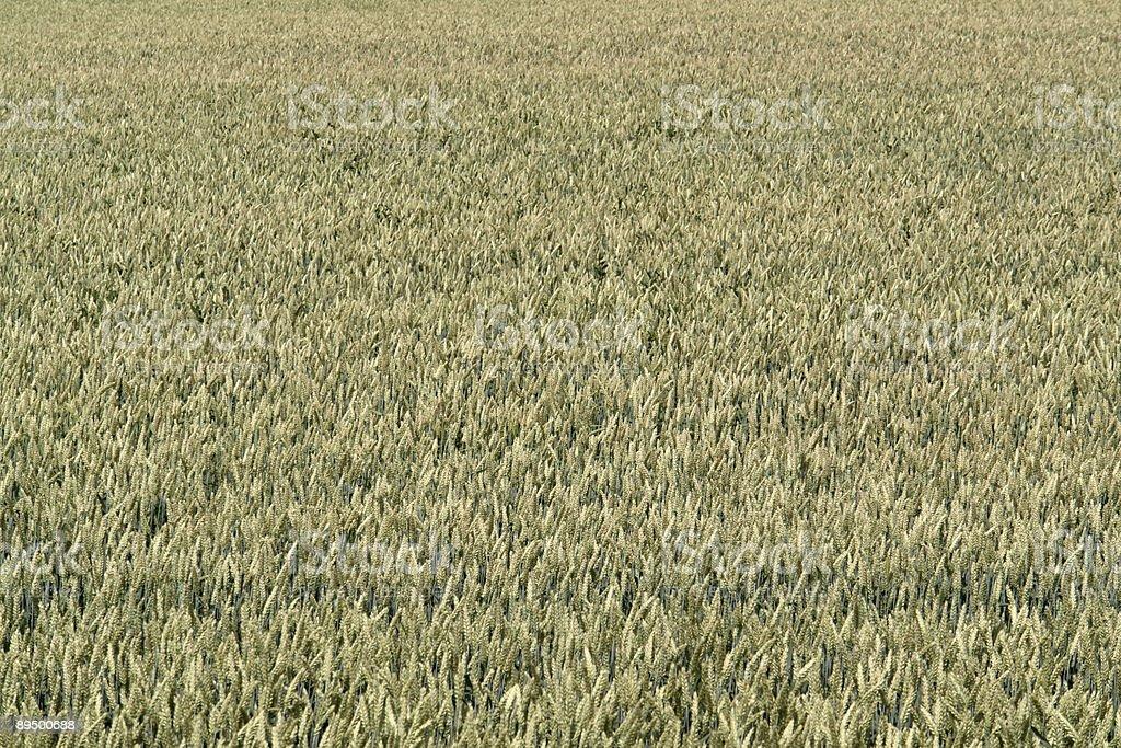 abstract grain field background royaltyfri bildbanksbilder