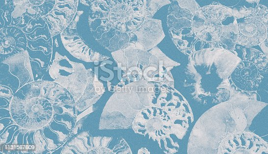 istock Abstract granular background of fossil Ammonites, decorative wallpaper of petrified shells, print from spirals of seashells on blue backdrop. 1131567609