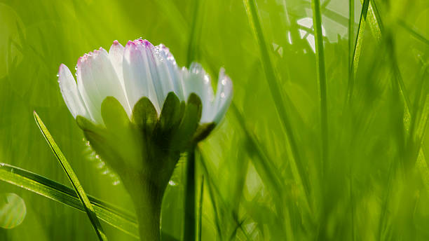 Abstract grass and flower background foto
