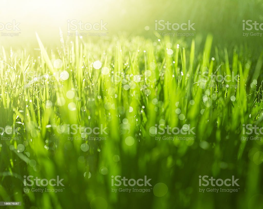 Abstract grass background royalty-free stock photo