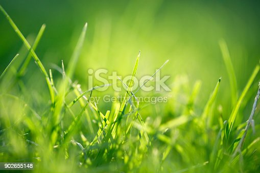 513070488 istock photo Abstract Grass Background 902655148