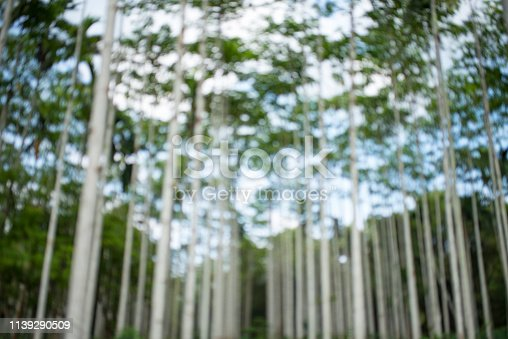 639809128 istock photo Abstract green background does not focus on trees 1139290509