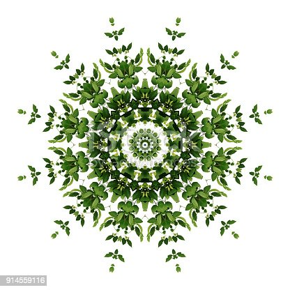 Abstract green background flora mandala pattern, wild climbing vine liana plant with kaleidoscope effect on white background.