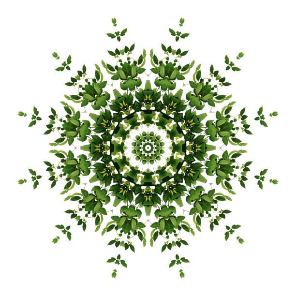 Abstrakten grünen Hintergrund Flora-Mandala-Muster, wilde Rebe Liana Kletterpflanze mit Kaleidoskop-Effekt auf weißem Hintergrund. – Foto
