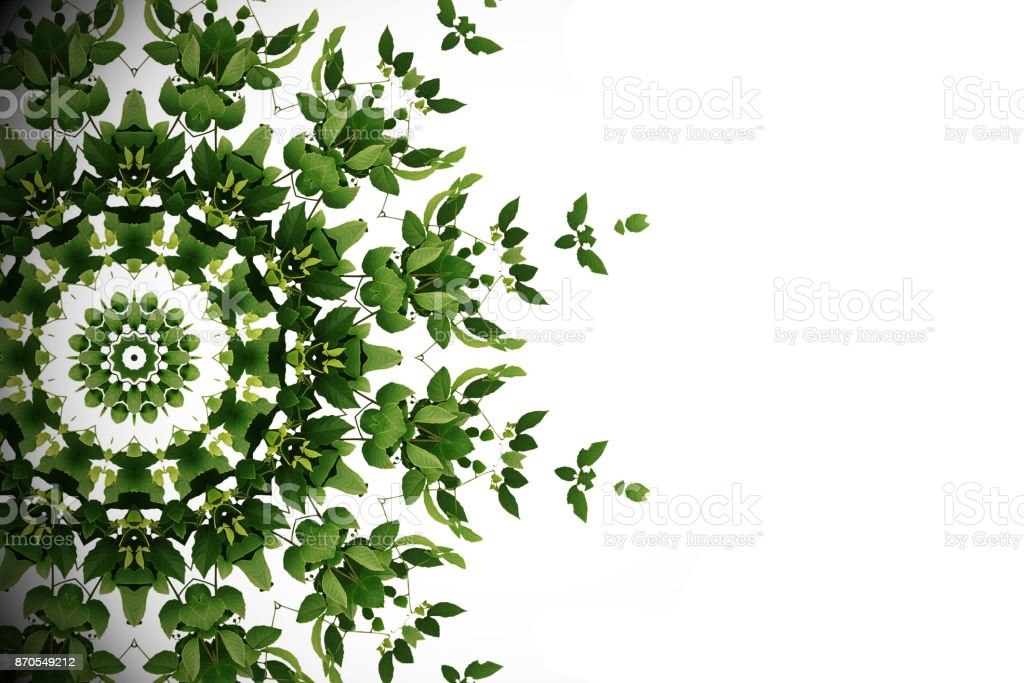 Abstract green background, wild climbing vine liana plant with kaleidoscope effect on white background. stock photo