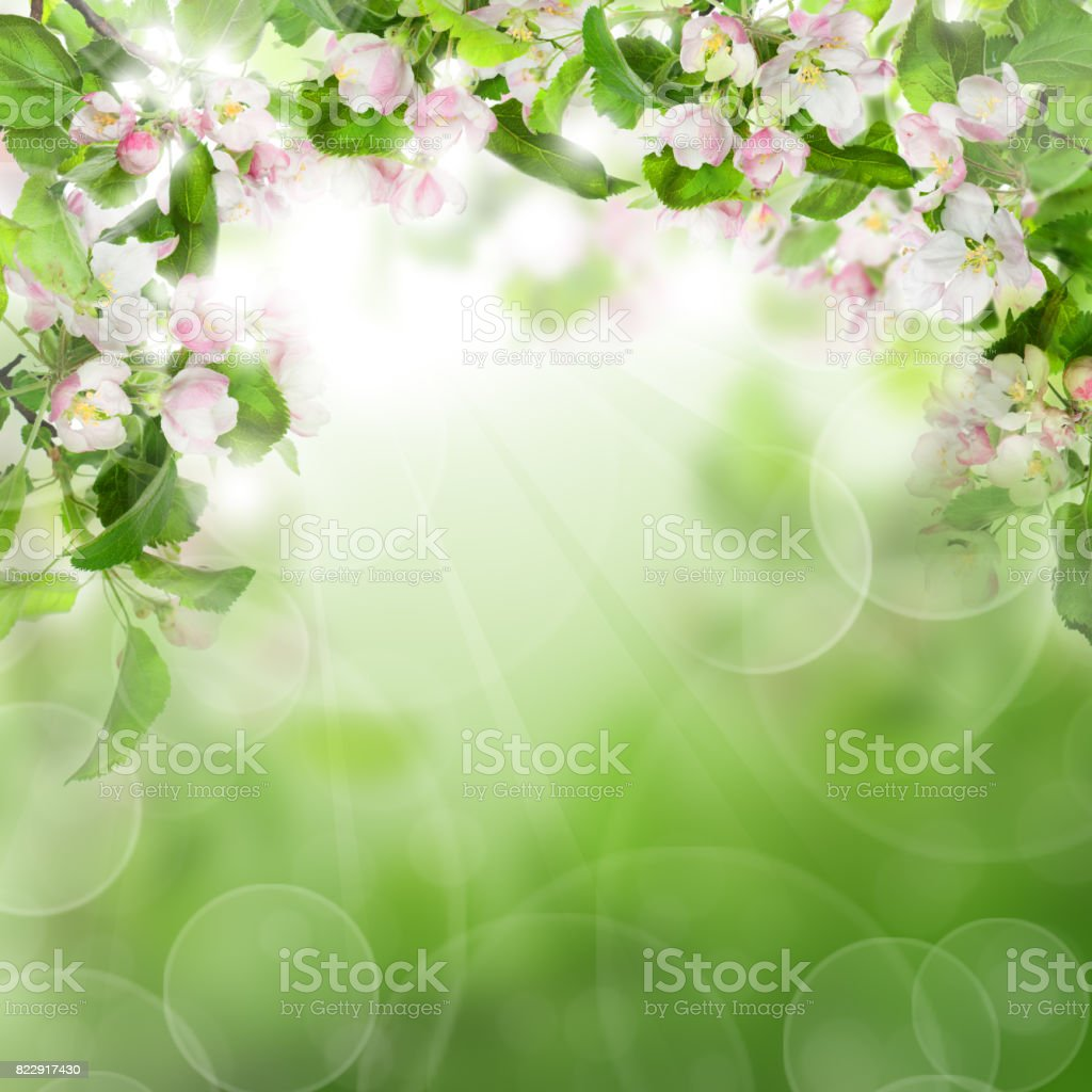 Abstract Green Background With White Flowers Green Leaves