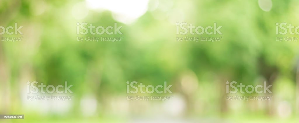Abstract green bokeh background from trees in the park stock photo