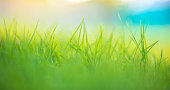 istock Abstract green grass background 1280307900