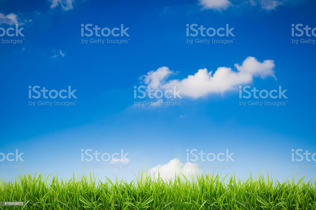 abstract green grass on blue sky background stock photo
