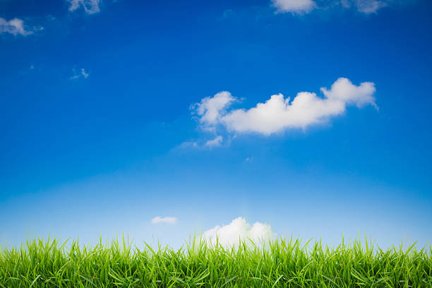 abstract green grass on blue sky background - foto de stock