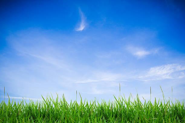 hierba verde abstracta en el cielo clound - foto de stock
