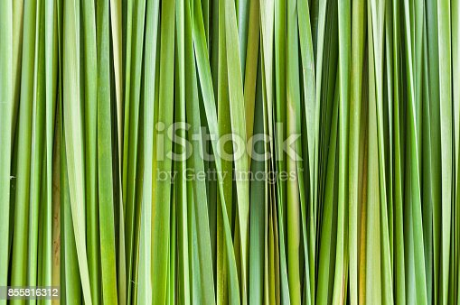 istock abstract green leaf background 855816312