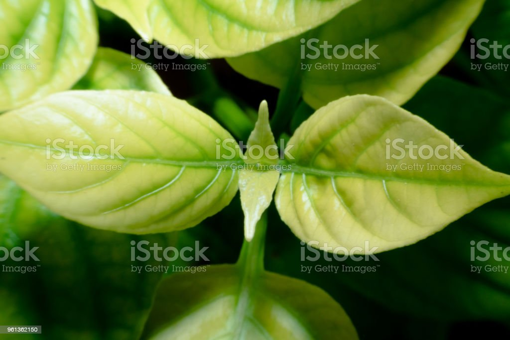 abstract, Green leaf pattern nature dark green background. stock photo