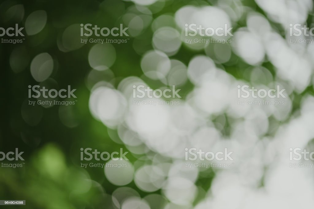 abstract, Green leaf pattern nature dark green background. royalty-free stock photo