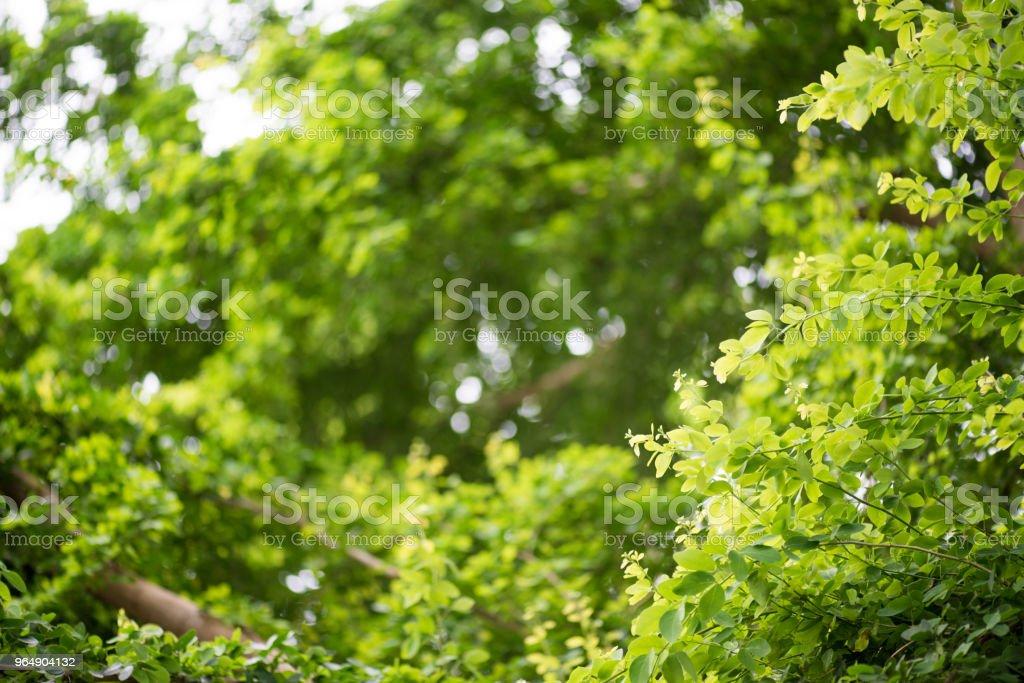 抽象, 綠葉圖案自然深綠色背景。 - 免版稅具有特定質地圖庫照片