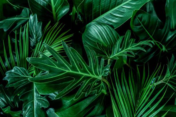 Abstract green leaf texture nature background tropical leaf picture id1213398331?b=1&k=6&m=1213398331&s=612x612&w=0&h=nfmiq5wjdxtqj mutektp2955pug1eehm8frb4szaws=