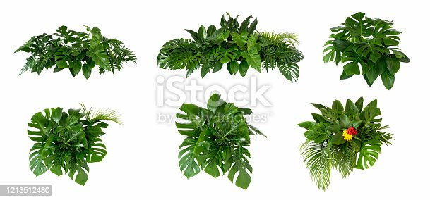 Green leaves of tropical plants bush (Monstera, palm, rubber plant, pine, bird's nest fern) floral arrangement indoors garden nature backdrop isolated on white background thailand,