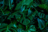 istock abstract green leaf texture, nature background, tropical leaf 1214705950
