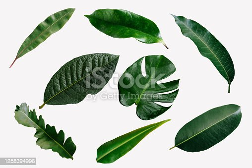 istock abstract green leaf texture, nature background, tropical leaf 1258394996