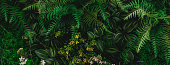 istock abstract green leaf texture, nature background, tropical leaf 1283774489
