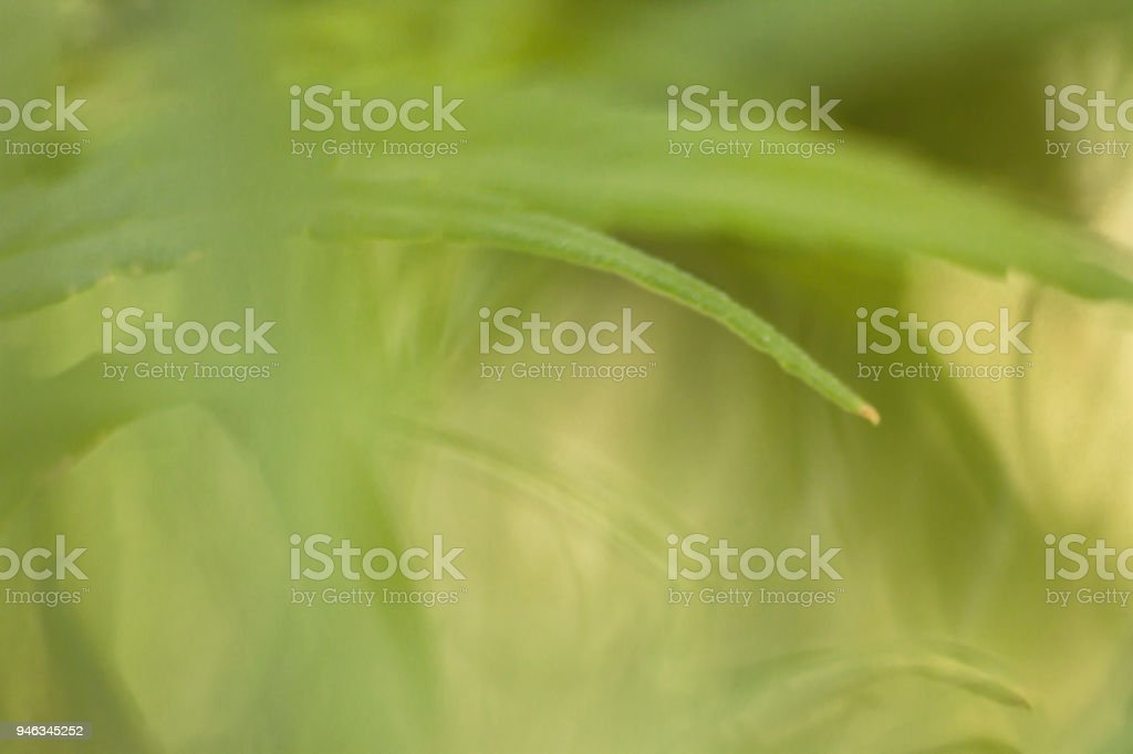 abstract green leafy background stock photo