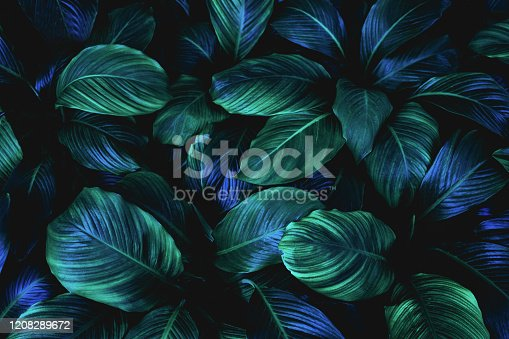 istock abstract green leaves background 1208289672