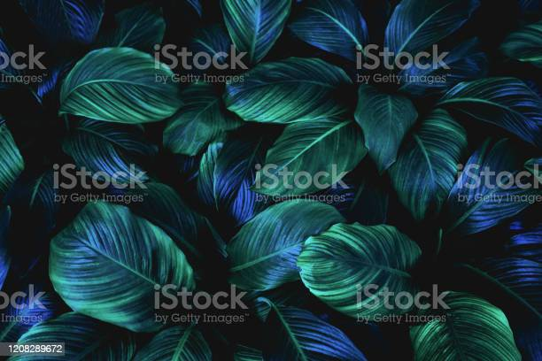 Abstract green leaves background picture id1208289672?b=1&k=6&m=1208289672&s=612x612&h=ues7onrirsc4dywaoo3syfuxyk t vaj1e8psgvujro=