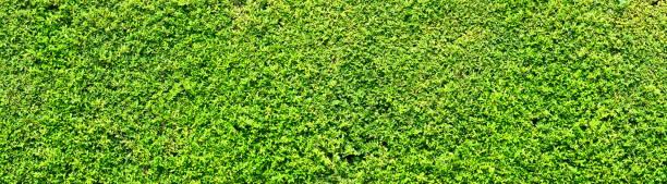 Abstract green leaves natural wall. stock photo