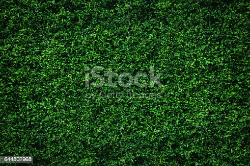 Backdrop of abstract green leaves natural wall.