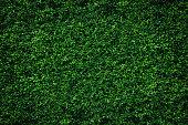 Abstract green leaves natural wall.