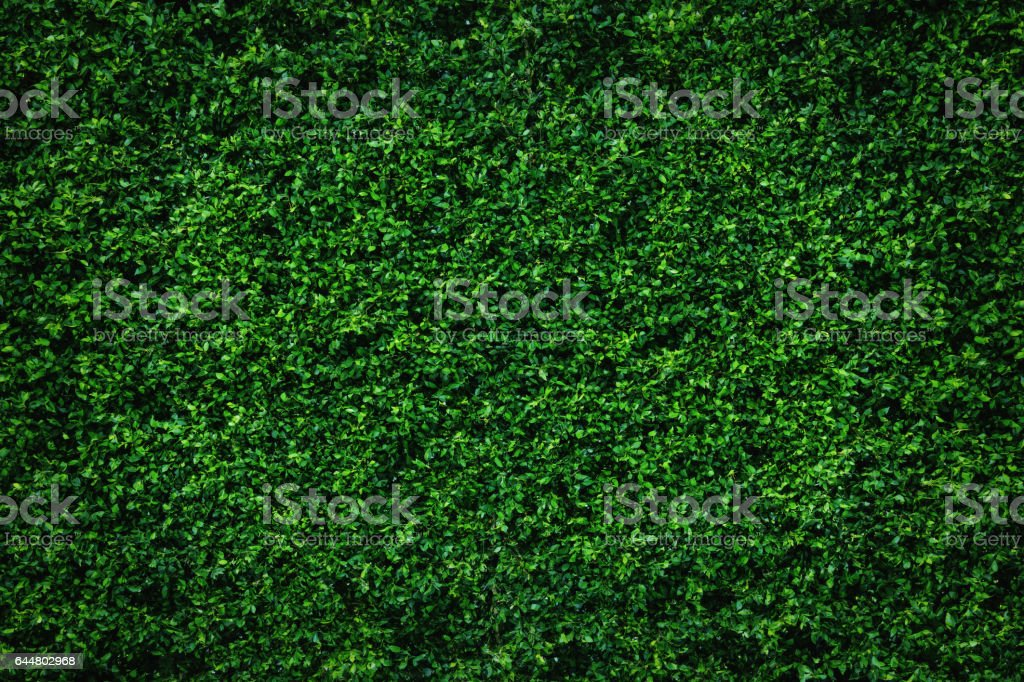 Abstract green leaves natural wall. stock photo
