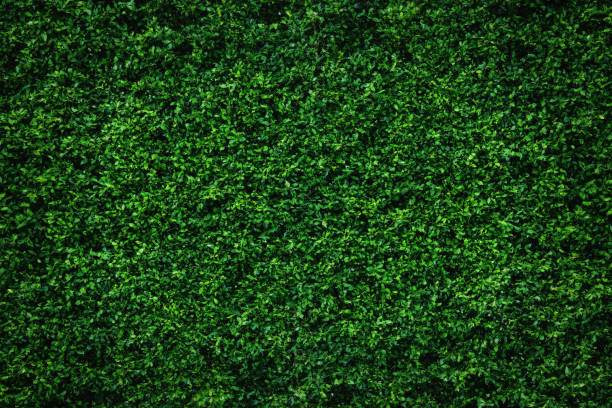 Abstract green leaves natural wall. Backdrop of abstract green leaves natural wall. green leaf stock pictures, royalty-free photos & images