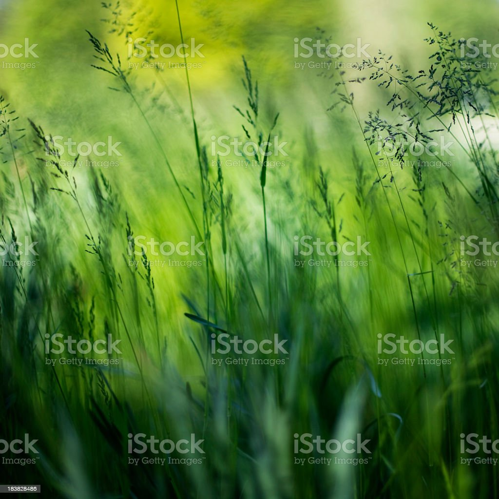 Abstract Green Meadow royalty-free stock photo