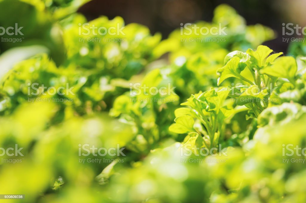 Abstract green nature harvest vegetable. Green leaves biology background. stock photo