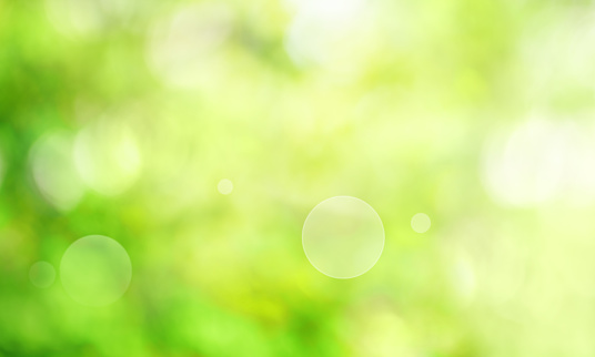 Abstract bright green spring scenery with sunny bokeh