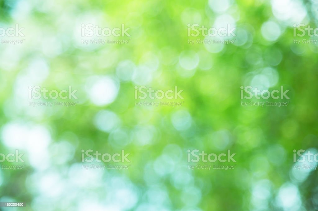 abstract green spring with sunlight bokeh background from tree stock photo