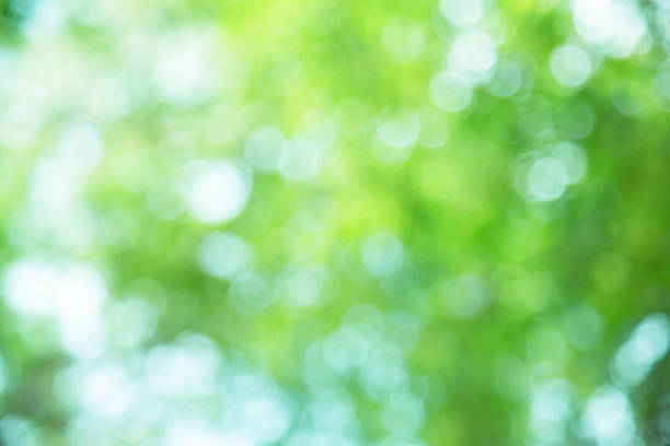 abstract green spring with sunlight bokeh background from tree - green background stock photos and pictures