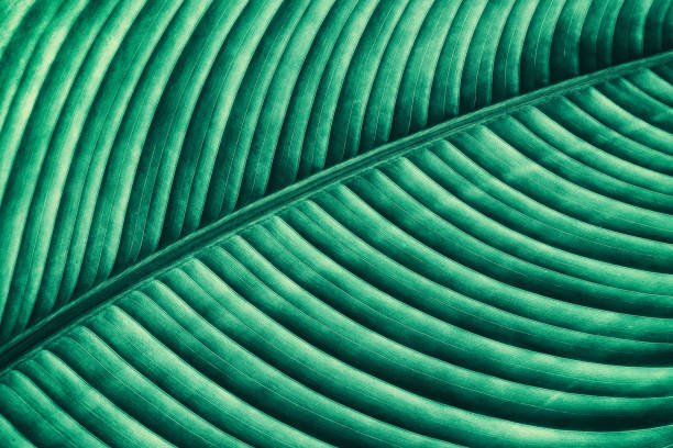 abstract green striped from nature background - foliate pattern stock photos and pictures