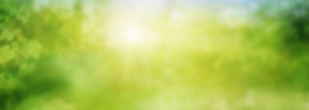 Abstract green sunny spring landscape stock photo