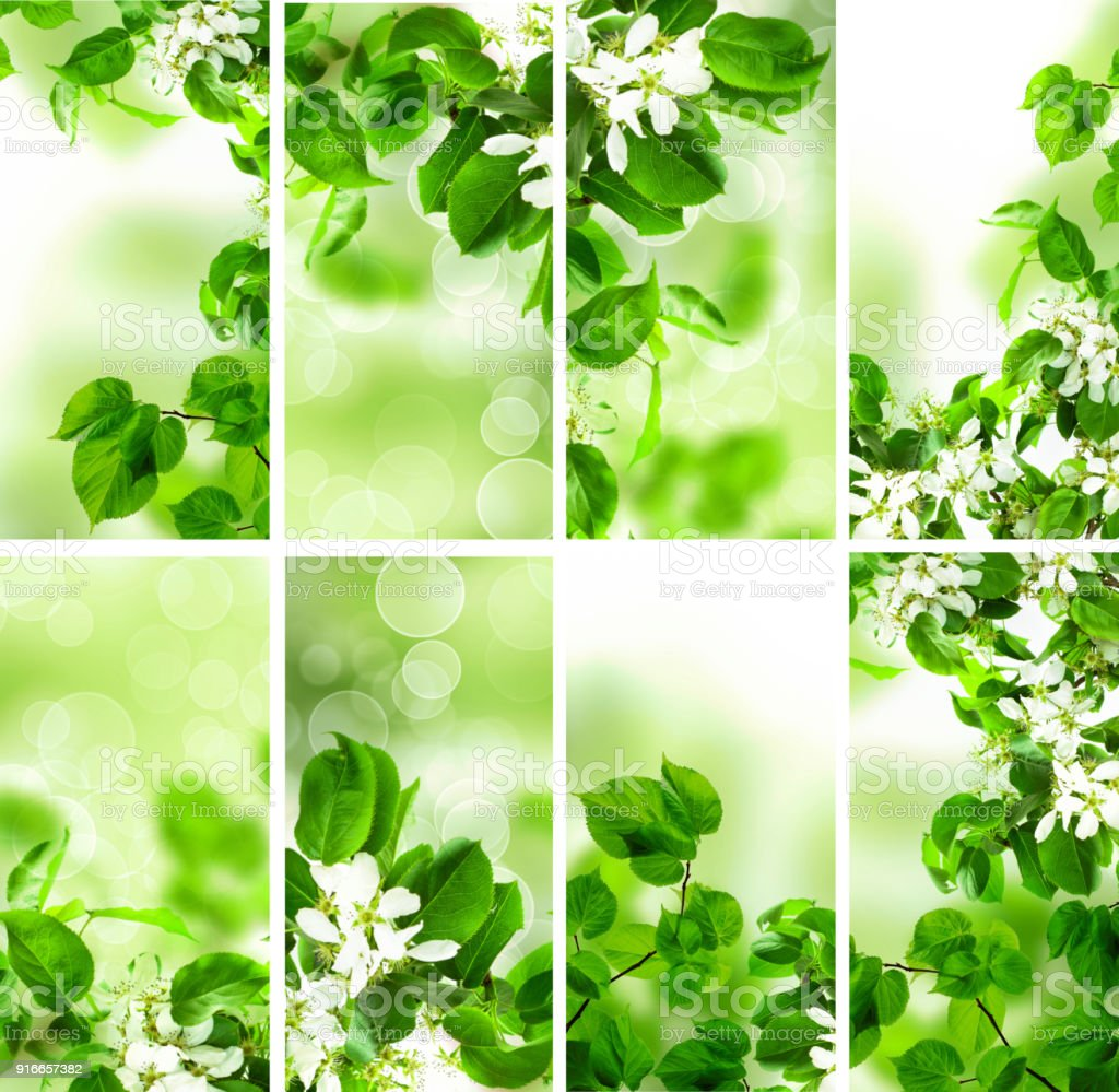 Abstract Green Wallpaper Background With Spring Foliage Bokeh