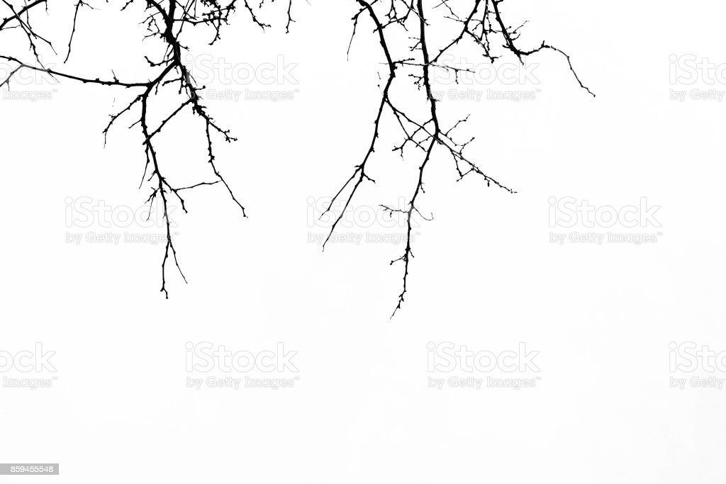 Abstract Halloween Background Black Branch Of Tree On A White ...