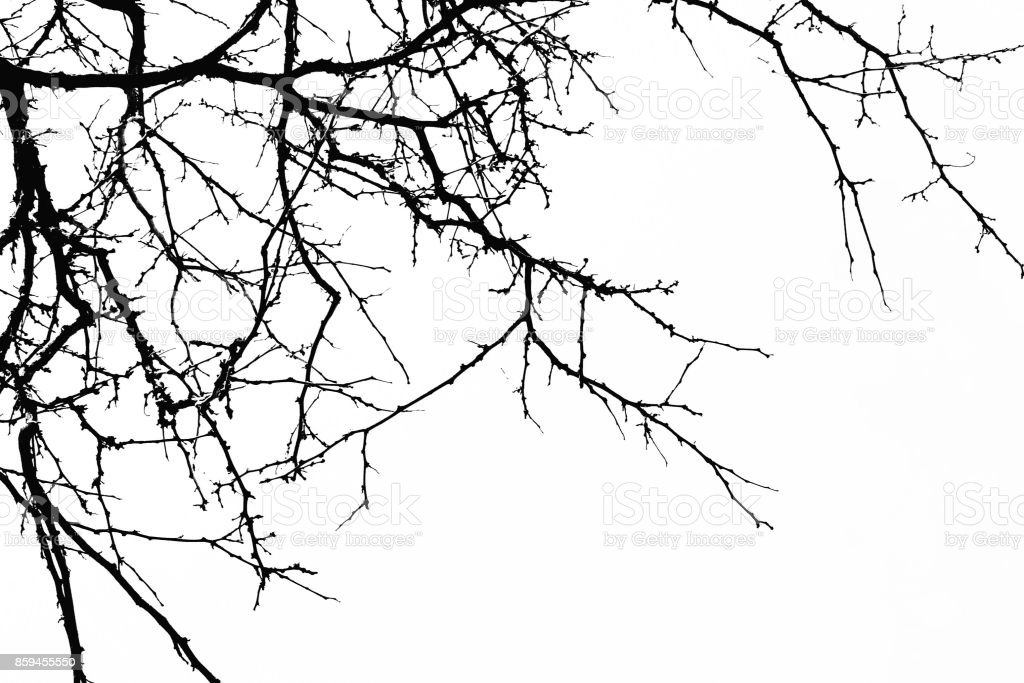 Abstract Halloween Background Black Branch Of Tree On A White Background Horror Concept Halloween Partybannerscardswallpaper Copy Space Stock Photo Download Image Now Istock